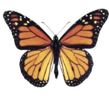 Solar Schmetterling Monarch - Danaus Plexippus