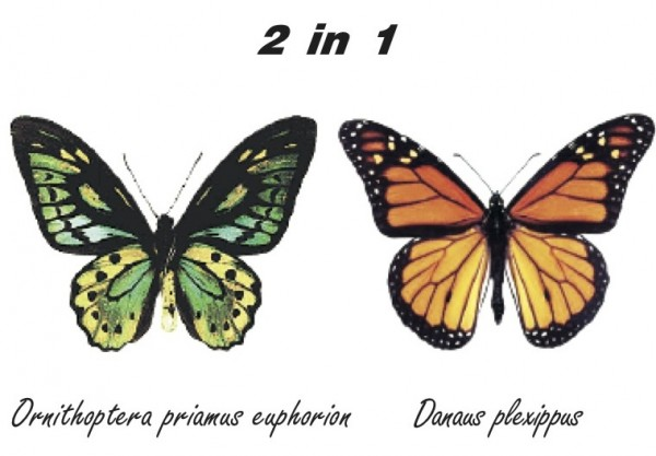 Solar Schmetterling Bausatz 2in1